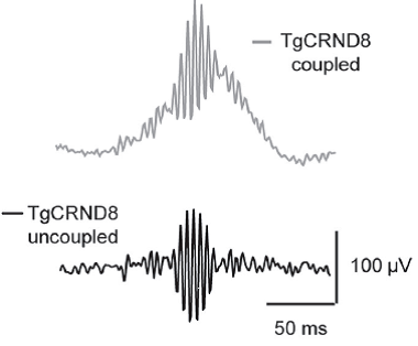These traces show that gamma frequency oscillations can be recorded without theta in the mice AD model.